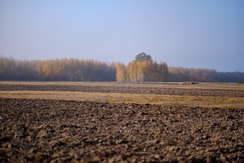 einsamer Herbstbaum in der Mitte des leeren Feldes stockfoto