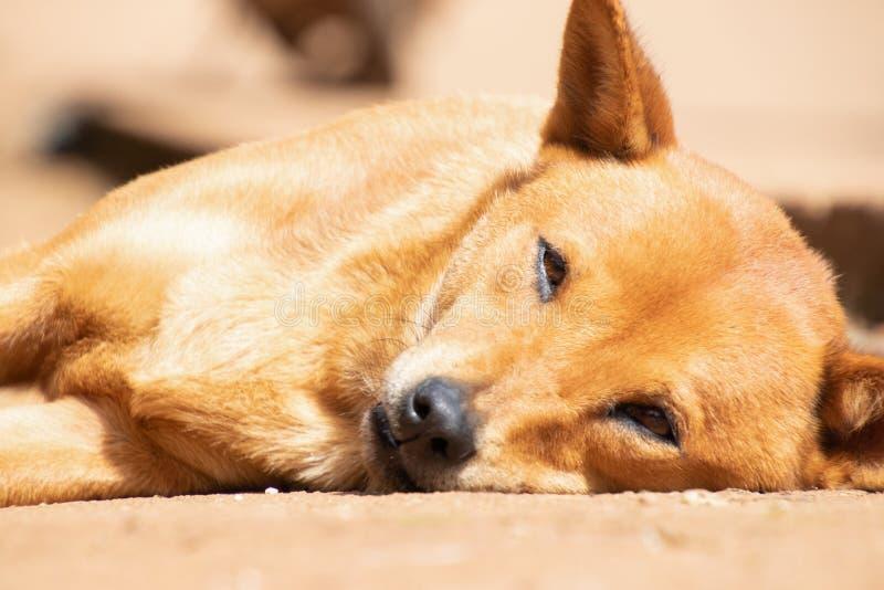 Einsamer Hund, der aus den Grund liegt Armer hungriger obdachloser Hund auf dem Straßenrand Haustiergesundheit und lizenzfreie stockfotografie