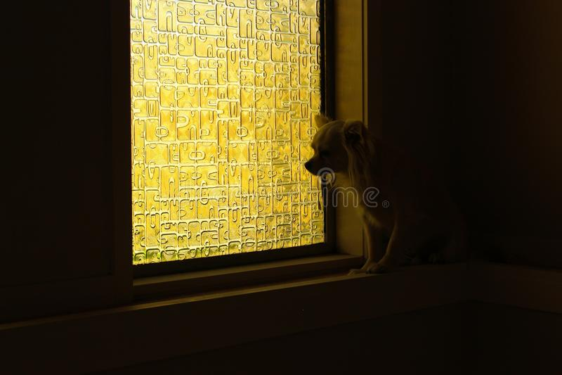 Einsamer Hund am Fensterbrett stockbild