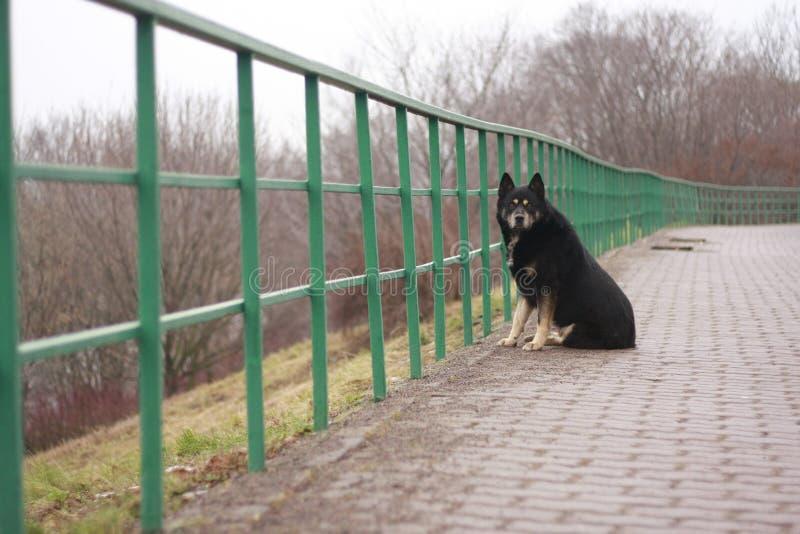 Einsamer Hund am Zaun stockfotos