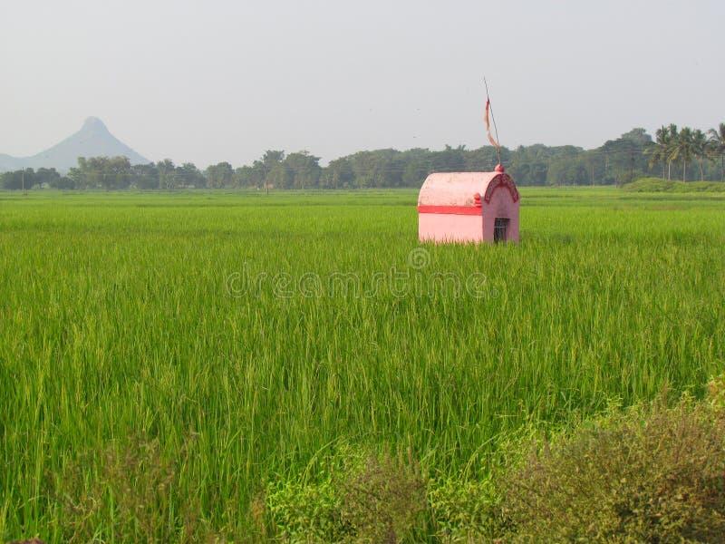 Einsamer kleiner rosa Haustempel auf den grünen Gebieten stockbild