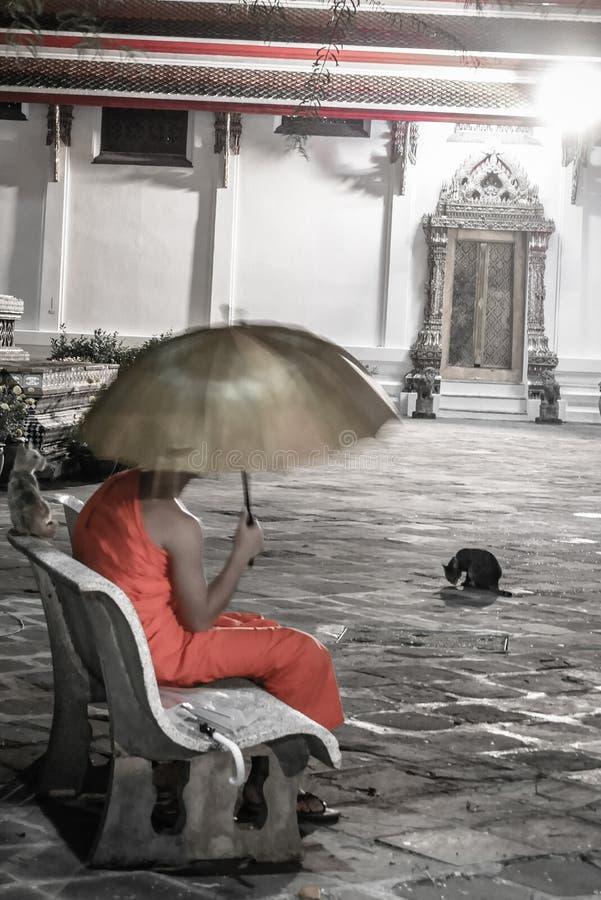 Einsamer Mönch mit dem Regenschirm, der auf Bank innerhalb des Yard des buddhistischen Tempels mit schwarzer Katze im Hintergrund stockfotos