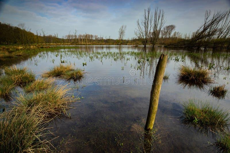 Einsamer Pfosten im Sumpfgebiet stockbild
