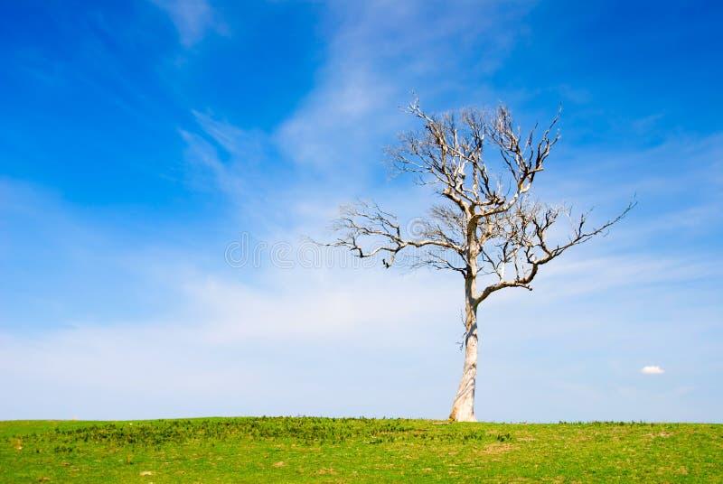 Einsamer toter Baum in der Koppel stockfoto