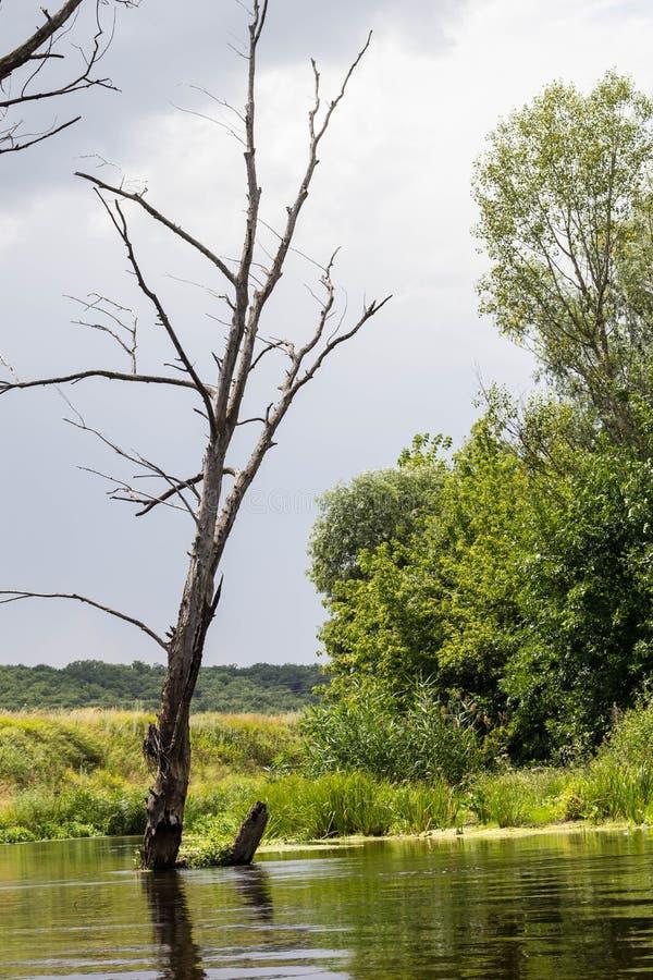 Einsamer trockener Baum gegen den blauen Himmel und den Fluss stockfotos
