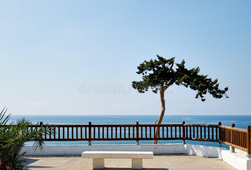 Einsamer tropischer Baum der idyllischen Landschaft auf Hintergrund des blauen Wassers des Mittelmeerhorizontes stockfotografie