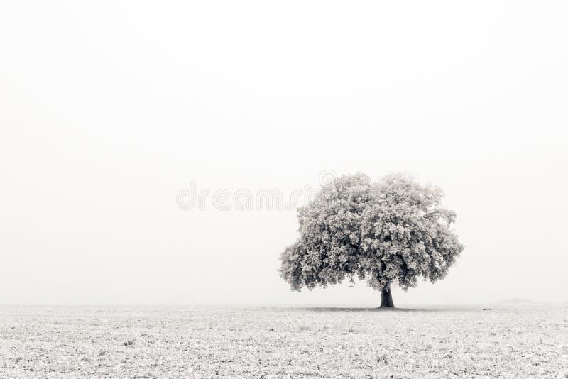 Einsamer und kalter Baum stockbild