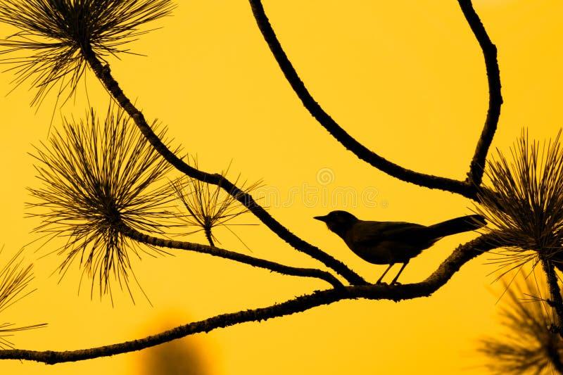 Schattenbild des Vogels gegen orange Himmel stockbild
