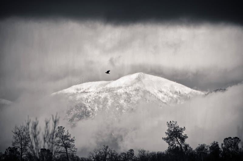 Einsamer Vogel und Sturm lizenzfreies stockbild