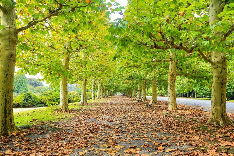 Einsamer Weg des Herbstes stockfotos