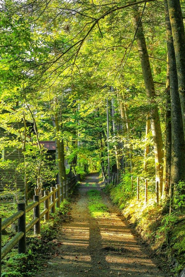 Einsamer Weg des Herbstes lizenzfreie stockfotos