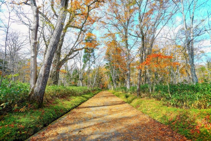 Einsamer Weg des Herbstes stockfotografie