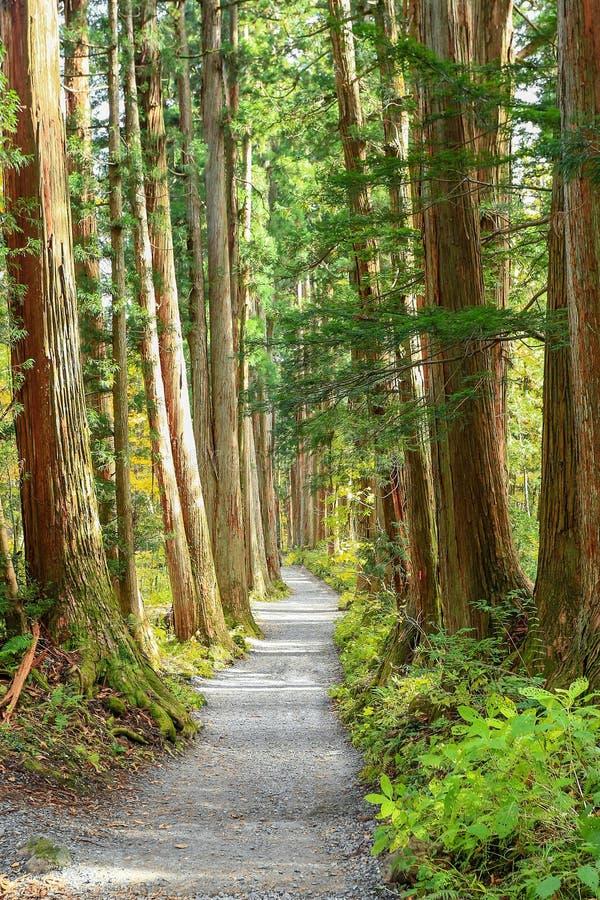 Einsamer Weg des Herbstes lizenzfreies stockfoto
