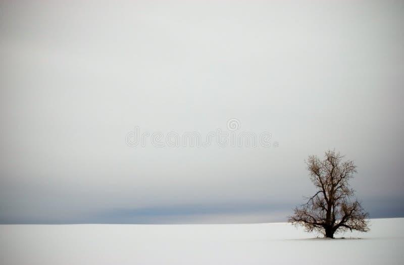 Einsamer Winter-Baum in der Schnee-Vignette lizenzfreie stockbilder