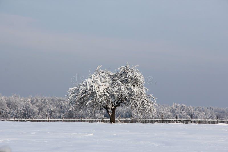 Einsamer Winterbaum lizenzfreie stockfotografie