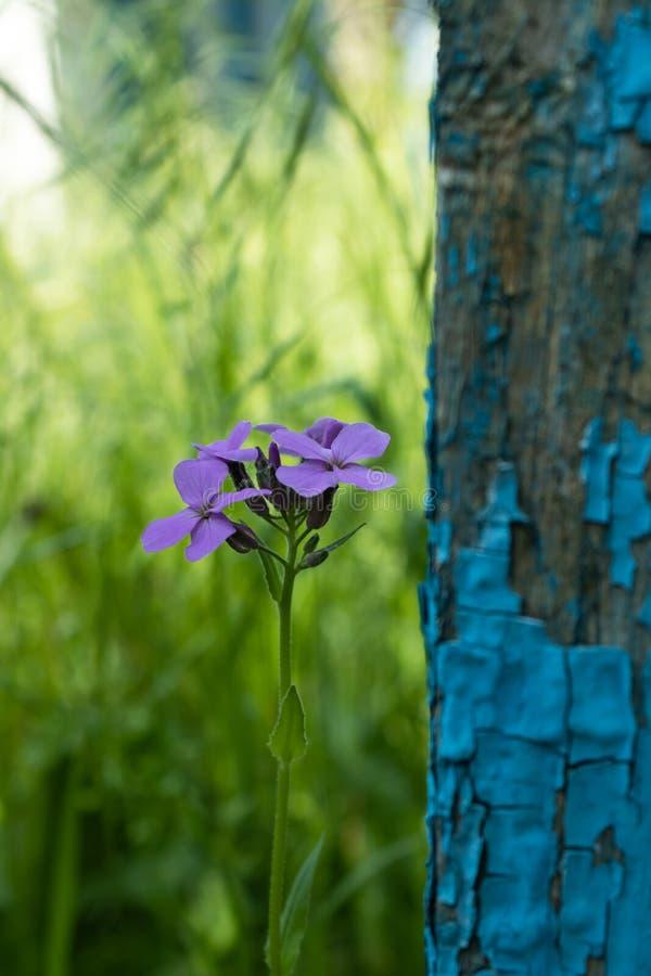 Einsamer Zierpflanzenbau im Schatten nahe dem sch?bigen Zaunabschlu? oben stockbild