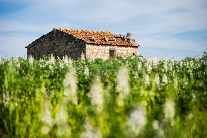 Einsames altes Haus mitten in Feld lizenzfreie stockfotografie