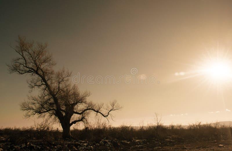 Einsames Baumschattenbild auf Gewann an der vibrierenden Orange des Sonnenuntergangs Berge von Aserbaidschan Kaukasus stockfotos
