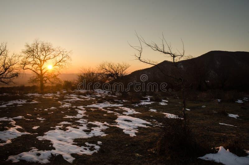 Einsames Baumschattenbild auf Gewann an der vibrierenden Orange des Sonnenuntergangs Berge von Aserbaidschan Kaukasus lizenzfreies stockfoto