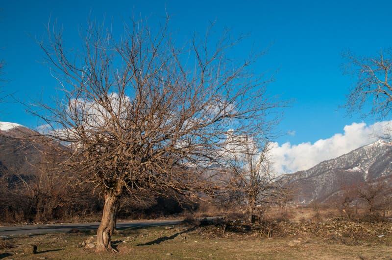 Einsames Baumschattenbild auf Gewann an der vibrierenden Orange des Sonnenuntergangs Berge von Aserbaidschan Kaukasus stockfotografie