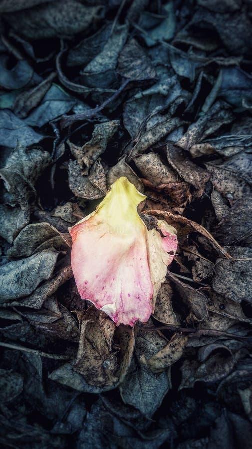 Einsames Blumenblatt stockbild