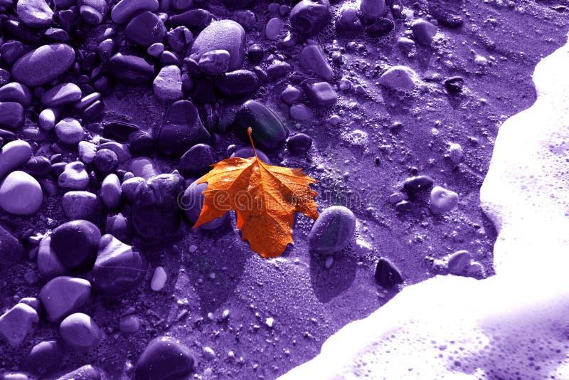 Einsames Goldblatt eines Ahorns auf einem violetten Hintergrund des feuchten Steins lizenzfreie stockbilder