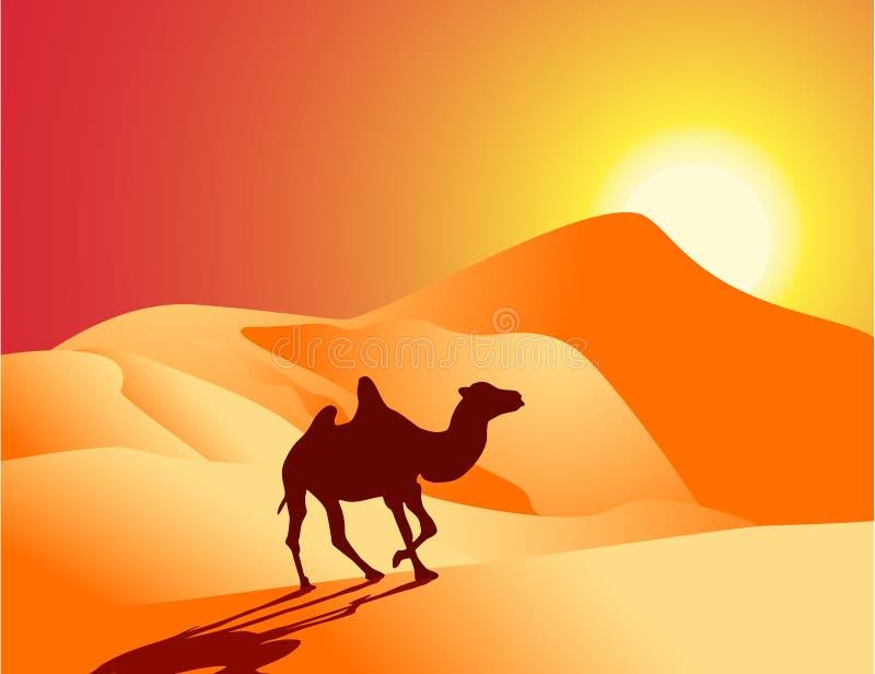 Einsames Kamel stock abbildung