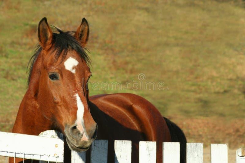 Einsames Pferd lizenzfreie stockfotografie