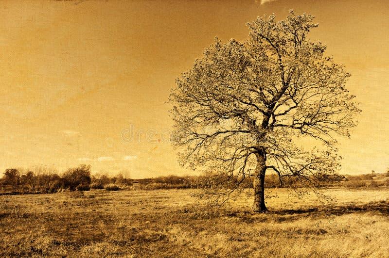 Einsames Retro- Foto des Herbsteichenbaums lizenzfreie stockfotografie
