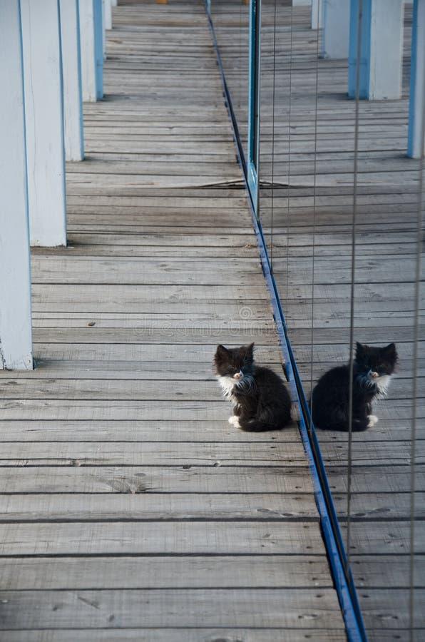 Einsames Schwarzweiss-Kätzchen auf einem hölzernen Gehweg wird in der Spiegelwand reflektiert lizenzfreie stockbilder