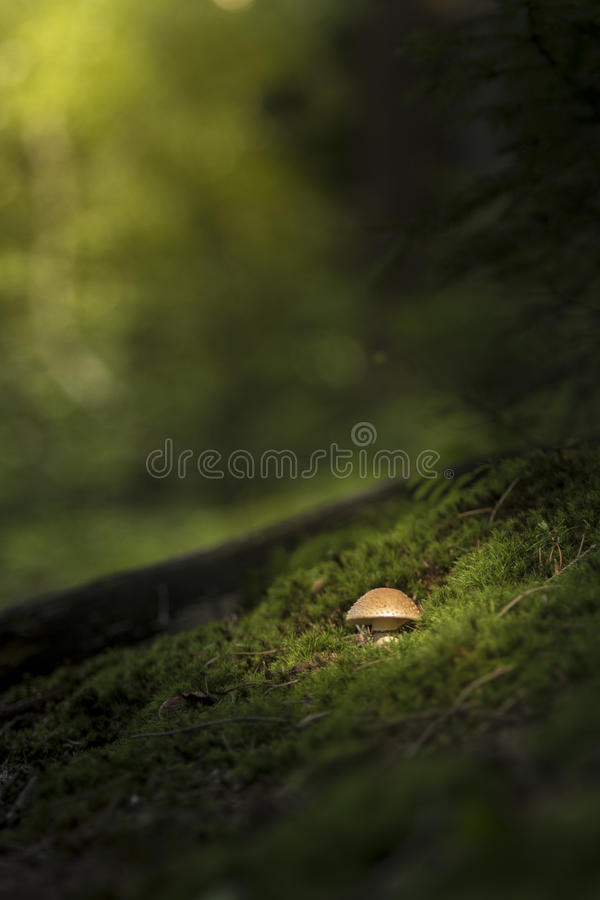 Einsames shroom im Wald stockfotos