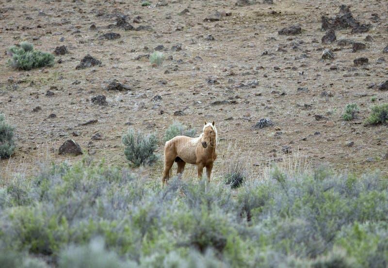 Einsames wildes Pferd stockfoto