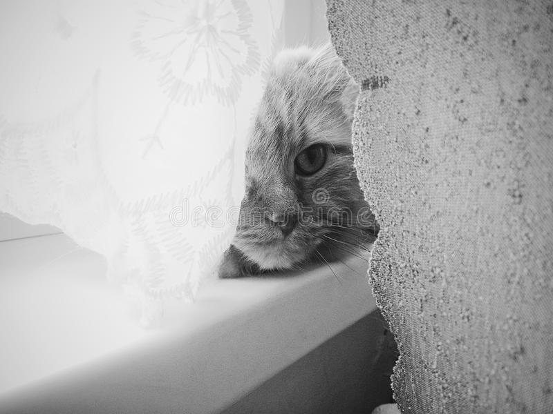 Einsamkeit auf dem Fenster stockfoto