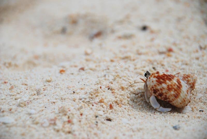 Einsiedlerkrebs auf Sand lizenzfreie stockfotos