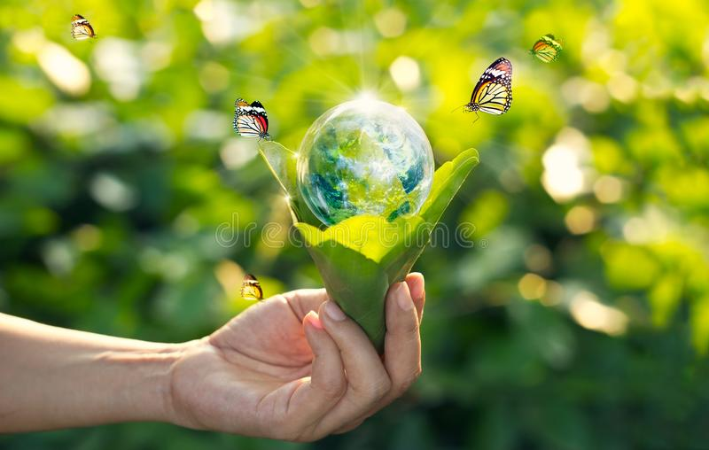 Einsparungsenergiekonzept, Tag der Erde stockfotografie