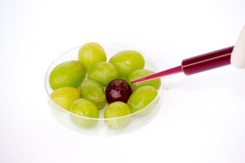 Einspritzen von Trauben lizenzfreies stockfoto
