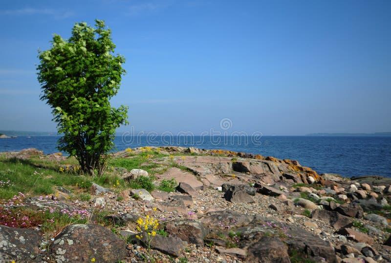 Einzelbaum an einem Sommertag lizenzfreies stockbild