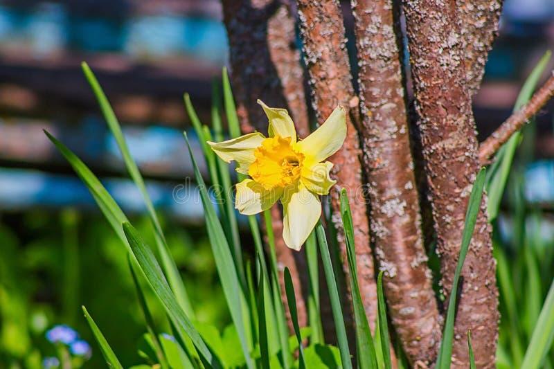Einzelne Blume nahe dem Baum stockfoto