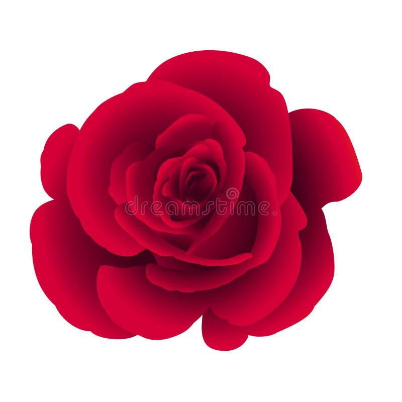 Einzelne Blume stieg vektor abbildung