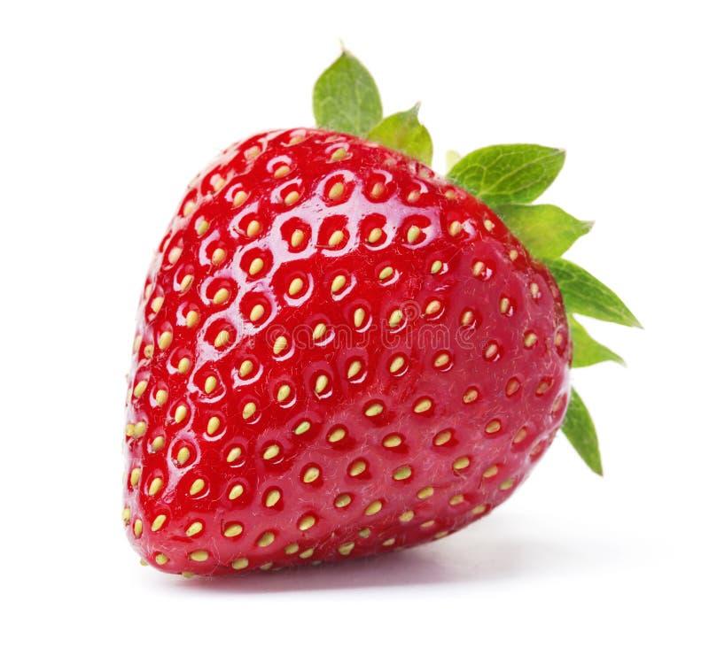 Einzelne Erdbeere stockfotos