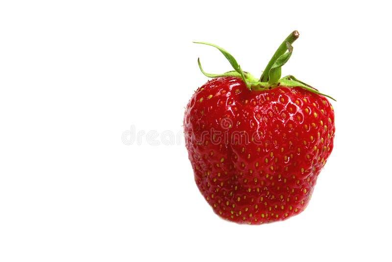 Einzelne Erdbeere stockfotografie