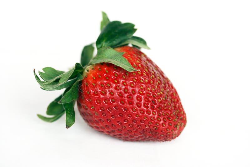Einzelne Erdbeere getrennt lizenzfreies stockfoto