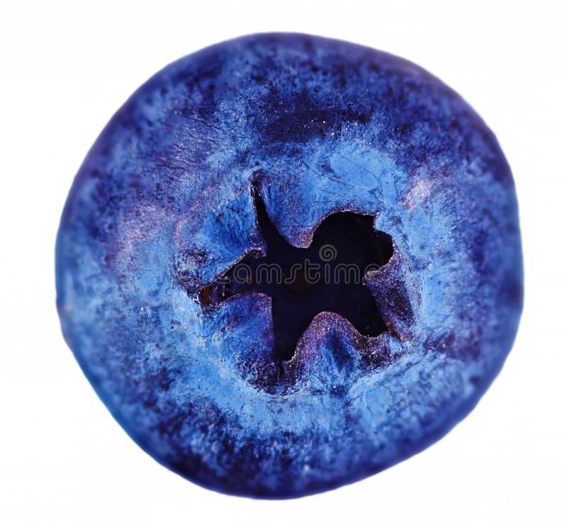 Einzelne frische Blaubeere lokalisiert auf weißem Hintergrund lizenzfreies stockbild