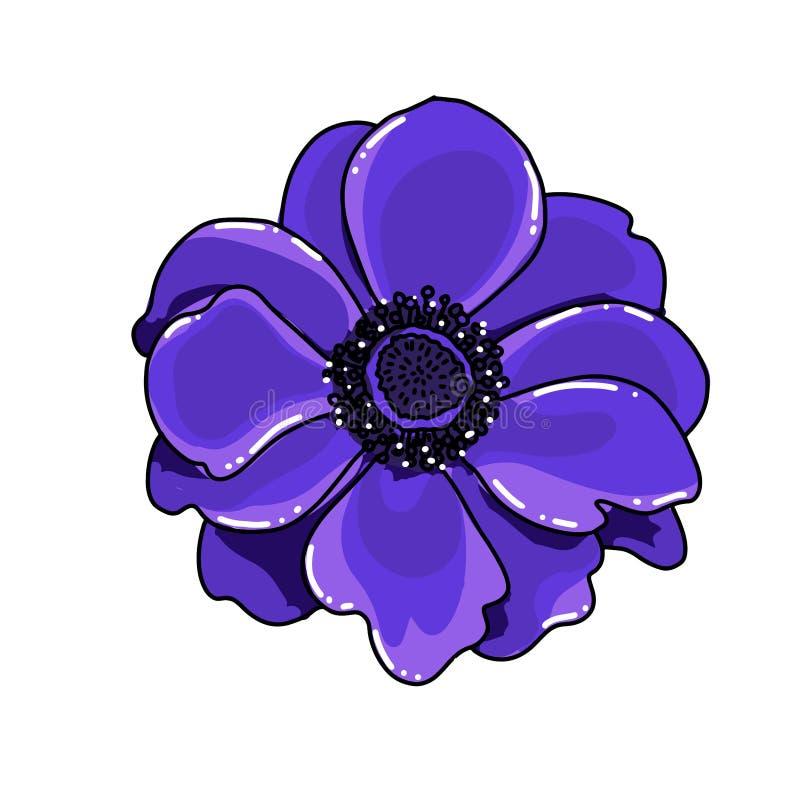 Einzelne große Handgezogene farbige Anemone Helle blaue Blume mit schwarzer Linie Weg, Nahaufnahme, auf einem weißen Hintergrund  stock abbildung
