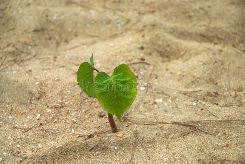 Einzelne Jungpflanze stockfotos