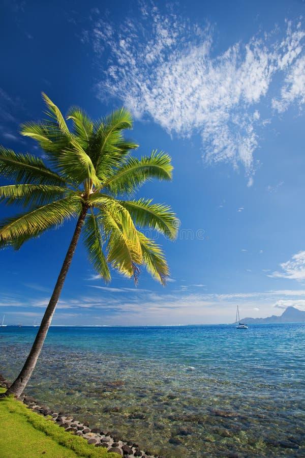 Einzelne Palme agains blauer Himmel auf Strand lizenzfreie stockfotografie