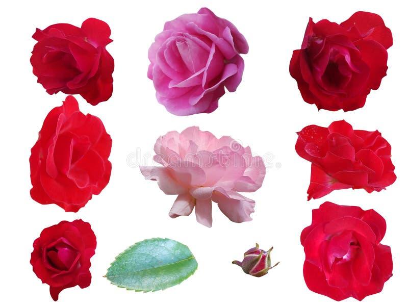 Einzelne rosafarbene Blumen auf weißem Hintergrund lizenzfreies stockbild