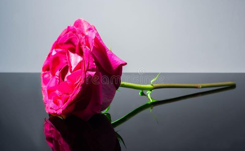Einzelne Rosarose allein, Anordnung, Schönheit lizenzfreies stockbild