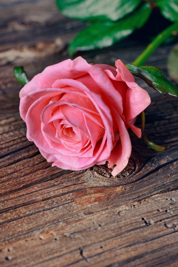 Einzelne Rosarose auf einer rustikalen Tabelle stockfoto