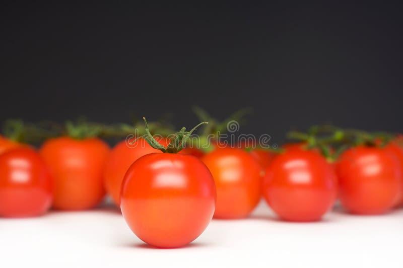 Einzelne Tomate lizenzfreie stockfotografie